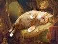 Rembrandt, Danae / Рембрандт, Даная