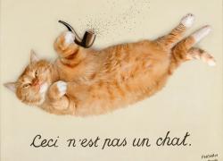 René Magritte, The Treachery of Images. Ceci n'est pas un chat / Рене Магритт. Верломство образов. Это не кот!