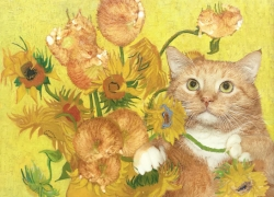 Sunflowers are ginger kittens