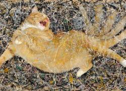 Jackson Pollock, Cat Number 1, 1949t