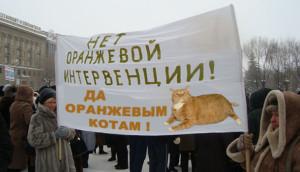 Оранжевой революции - нет! оранжевым котам - да!
