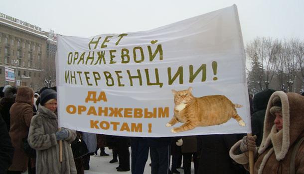 Дамы за котов