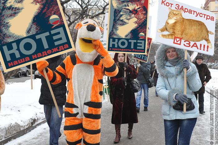 Тигры и гирлы - за котэ