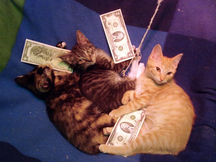 kittens at Rzevka shelter