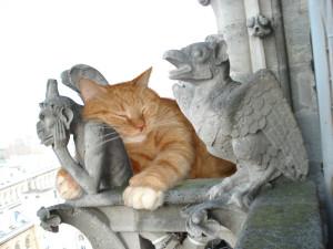 gorgulia-cat-sm