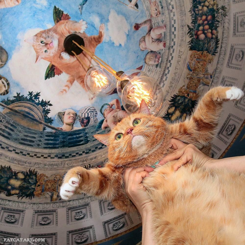 Zarathustra the Cat flying under Andre Mantegna's Oculus ceiling