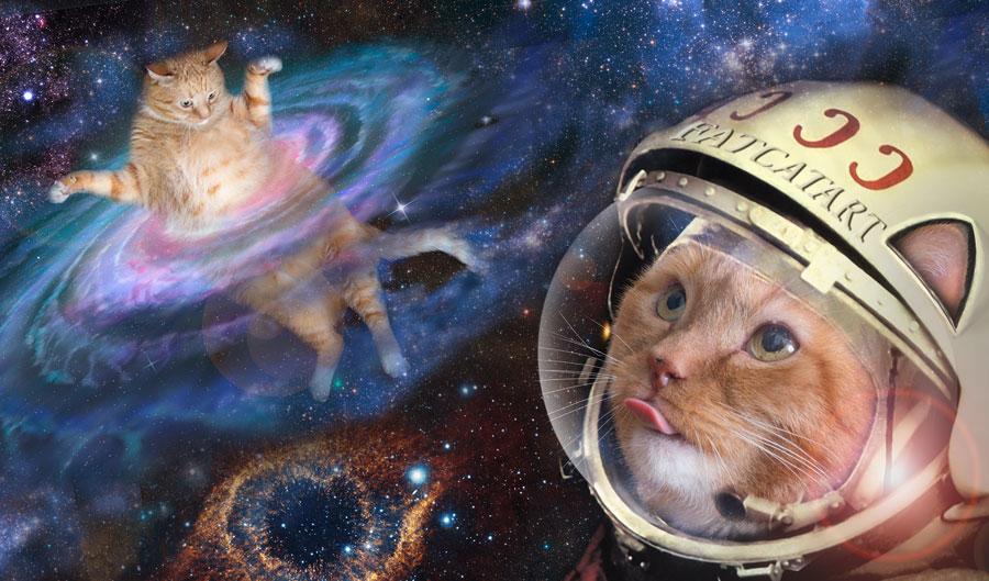 картинки с кошками в космосе конце поста несколько