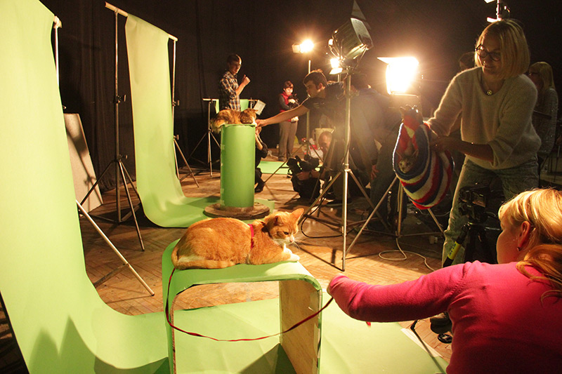 Making of Catboom!