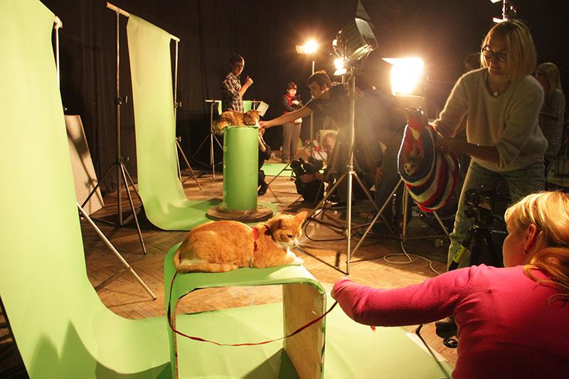Making of Catboom!