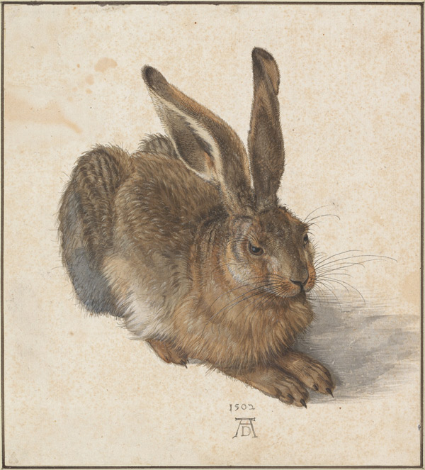Albrecht Dürer, Hare, from Albertina Gallery collection