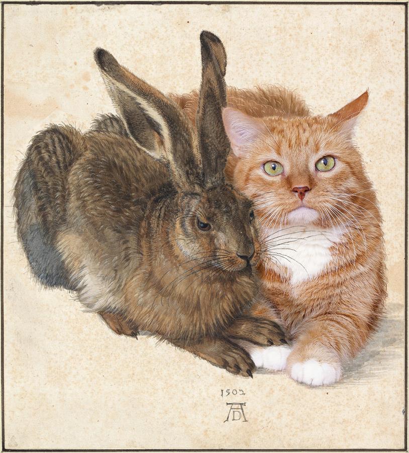 Albrecht Dürer, Hare and Cat
