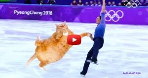 figure-skating-cat-min