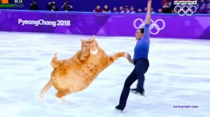 figure-skating-cat