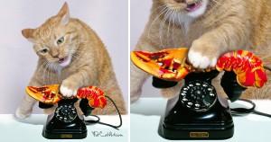 Dali-telephone-lobster-cat-min
