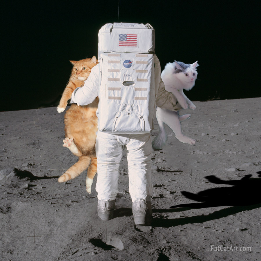 Buzz Aldrin deploys Apollo 11 cats. The hidden photo from NASA revealed!
