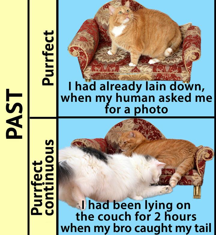 English Grammar by Zarathustra the Cat